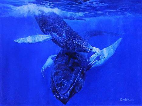 Playful Humpbacks by Noe Peralez