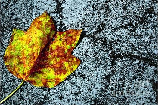 Hard Fall by Juan Alonso