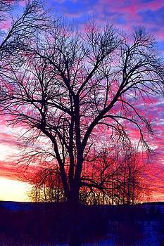 -11 Sunrise by Dacia Doroff