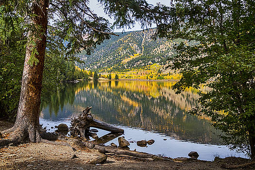 James BO  Insogna -  Autumn Cottonwood Lake Reflections Dreaming