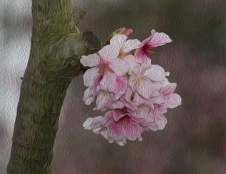 Flower by Jessica NguyenPeach