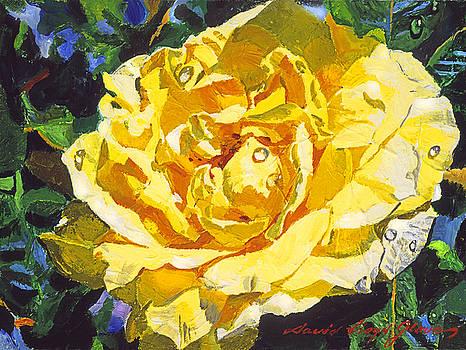 David Lloyd Glover -  GOLDEN RAIN