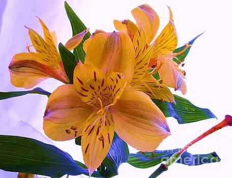 Golden Tiger Lily Photograph by Trudy Brodkin Storace