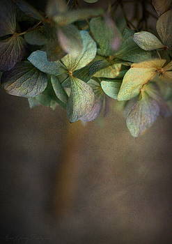 Hydrangea by Annie Lemay
