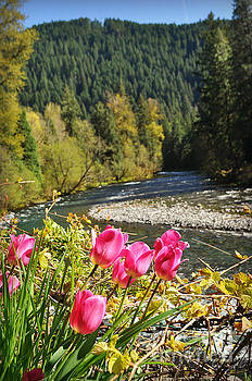 McKenzie River Tulips by Mindy Bench