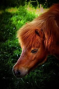 Pony Grazing by Baggieoldboy