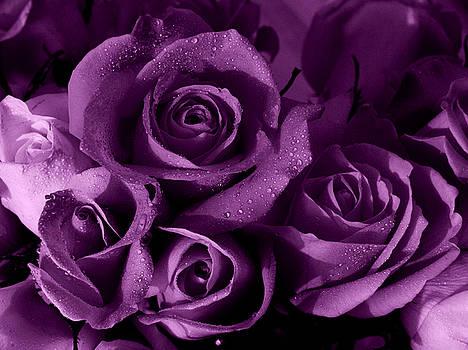 Purple Haze by Nancie DeMellia