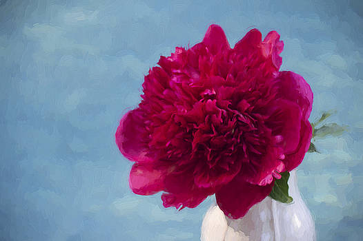 Romantic Fuchsia Peony  by Daphne Sampson
