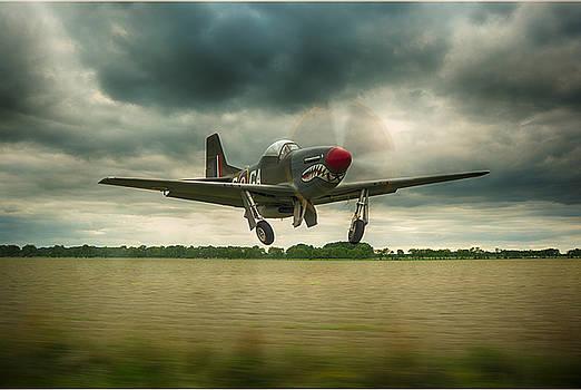 The Shark Mustang by Jason Green