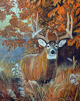 Whitetail Buck by Alvin Hepler