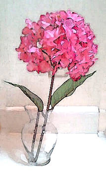 045 Hydrangea by Peggy Cooper