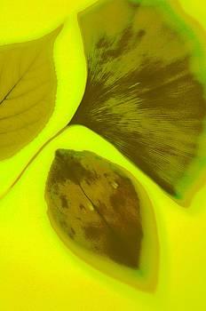 3 Leaves Series by Tamarra Tamarra