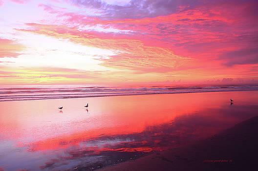 A most magnificent sunrise 2 by Julianne Felton