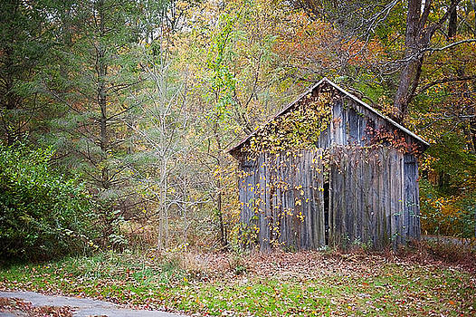 Abandoned shed by Kelley Nelson