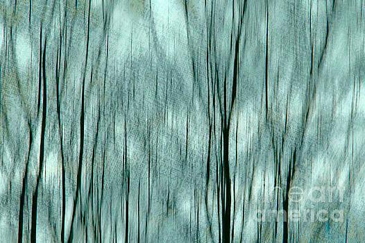 Abstract Trees by Dariusz Gudowicz