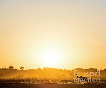 Tim Hester - Africa Sunset Impala