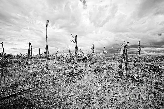 Scott Pellegrin - Agricultural Wasteland