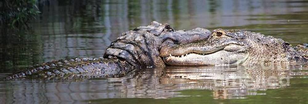 Paulette Thomas - Alligator Love