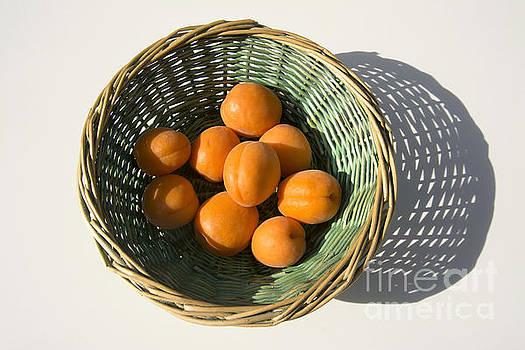 BERNARD JAUBERT - Apricots