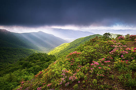 Asheville NC Blue Ridge Parkway Spring Flowers North Carolina by Dave Allen