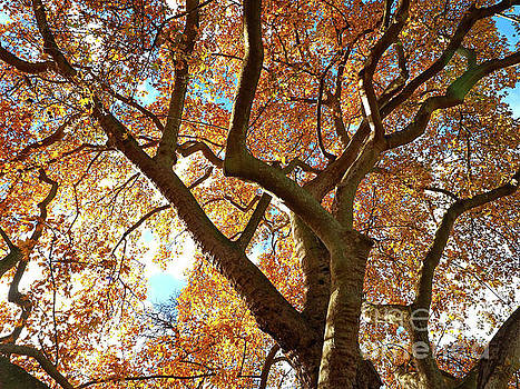 Autumn Canopy by Alex Cassels