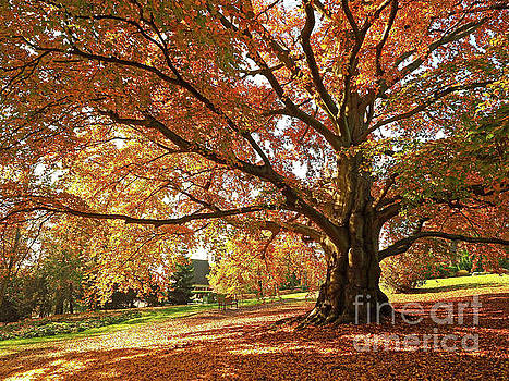 Autumn in the Park by Alex Cassels