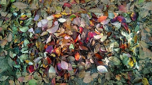 Autumn Leaves by Lori Seaman