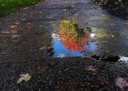 Autumn Reflections by Brian Chase
