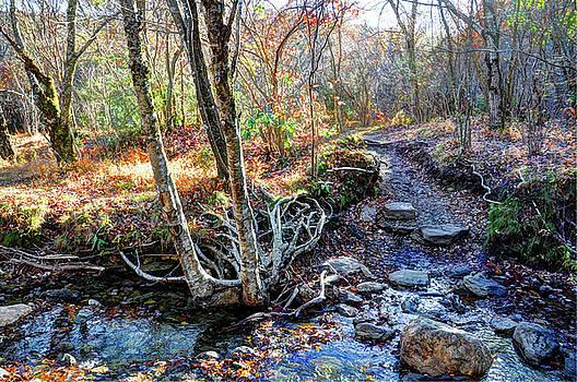 Autumn by Savannah Gibbs
