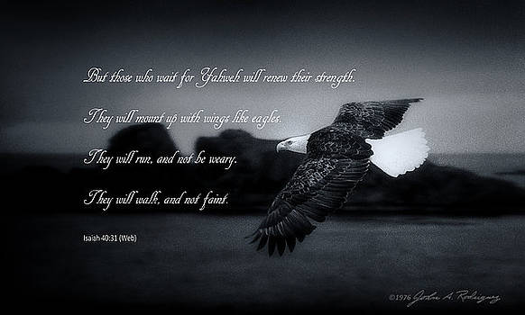 Bald Eagle in Flight With Bible Verse by John A Rodriguez