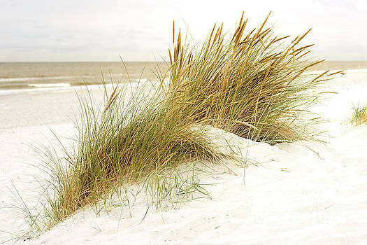 Beach Grass by Hannes Cmarits
