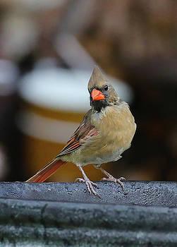 Bird 7 by Michel DesRoches