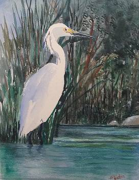 Bird of Paradise by Heidi Patricio-Nadon