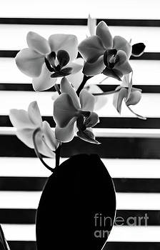 Black and white orchid by Gerald Kloss