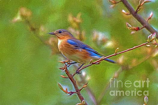 Bluebird by Marion Johnson