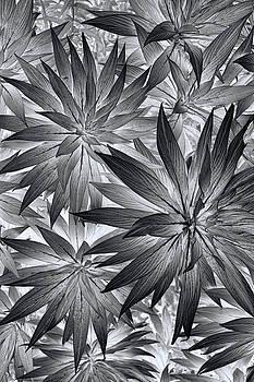 Botanical by Wayne Sherriff