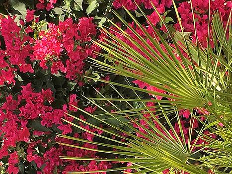 Bougainvillea by Kay Gilley