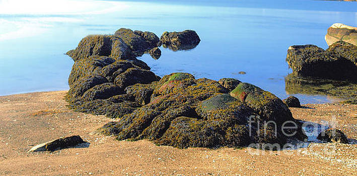 Branford Bay by Raymond Earley