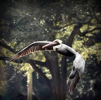 Rosanne Jordan - Brown Pelican