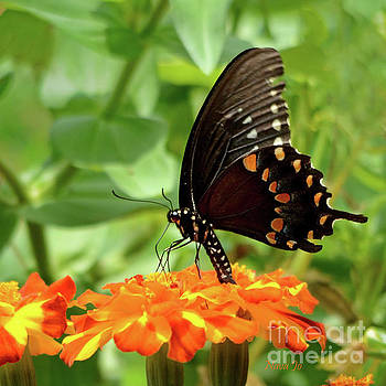 Butterfly Garden by Nava Thompson