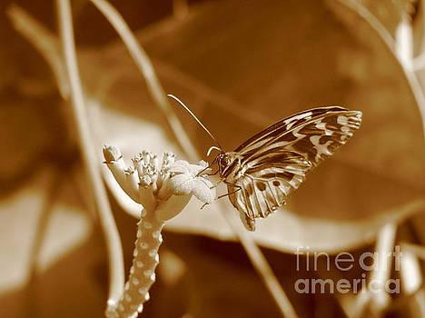 Butterfly by Michael Krek