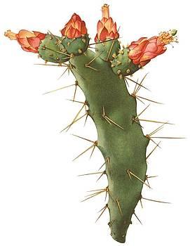 Ramneek Narang - Cactus