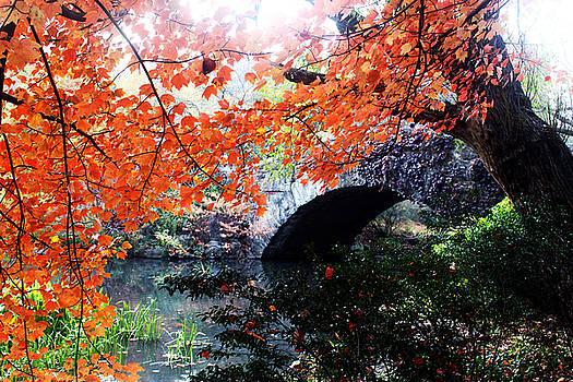 Central Park New York City by Mark Ashkenazi