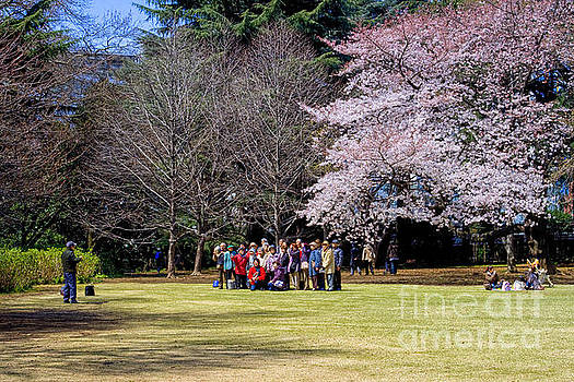 Patricia Hofmeester - cherry blossom festival