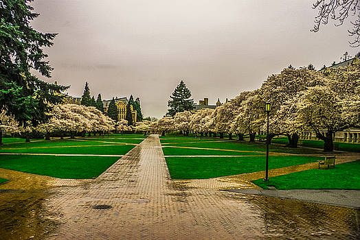 Cherry Blossoms by Jerry Cahill
