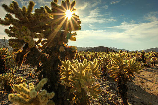Cholla Garden by Jackie Novak