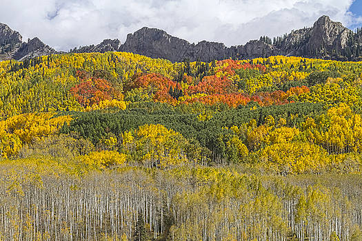 James BO  Insogna - Colorado Kebler Pass Fall Foliage