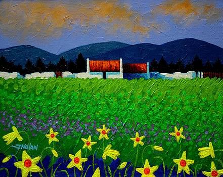 Daffodil Meadow by John  Nolan