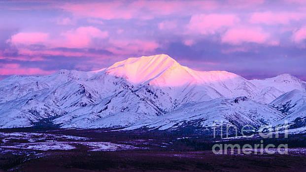Denali - Alpenglow 5 by Mary Carol Story