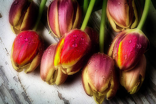 Dew Covered Tulips by Garry Gay